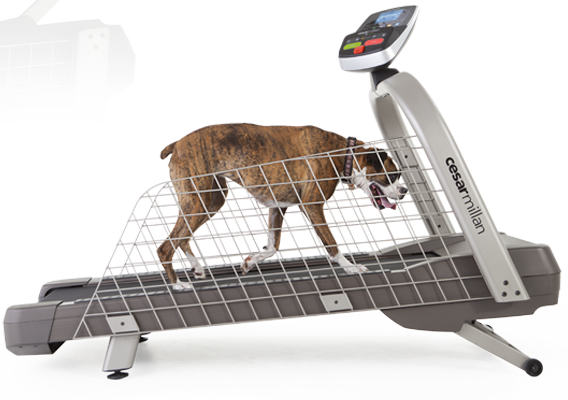 Training Your Dog To Use A Treadmill